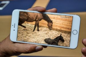 GSM Foaling Camera system for viewing your foaling box on your mobile phone and internet